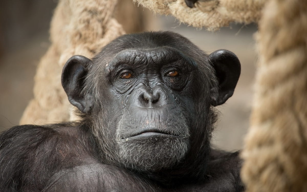 Controlando el mono con la mente - GeorgioGalben.com